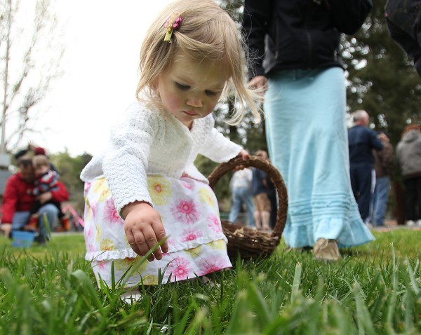 Harper Malone, then 20 months hunts for Easter eggs during the 2010 Sebastopol Kiwanis Club's Easter egg hunt. (Crista Jeremiason / The Press Democrat)
