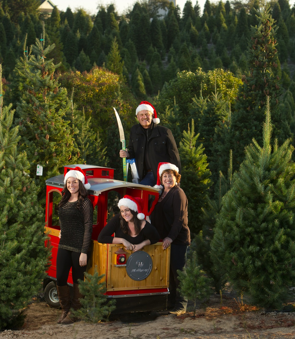 Christmas Trees Garden Ridge: Did Your Christmas Tree-shopping Experience Fall Short On